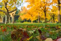 瘦西湖秋天树叶树木图片