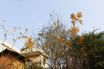 阳光照在树木下房子