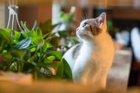 一只小猫看向窗外