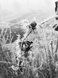 霜露中的植物