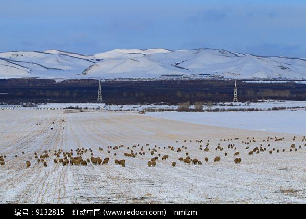 呼伦贝尔牧场之冬草地羊群图片