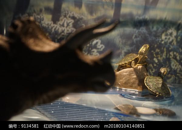 三角龙剪影后面的两只小巴西龟图片