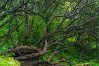 森林里的树枝