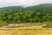 四川黄龙的森林