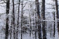 松林冰雪风景