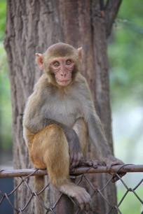 正面特写小猴子