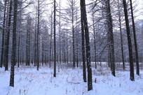 大兴安岭冬季森林