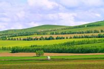 农田和防护林风景