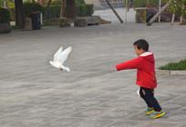 追鸽子的小男孩