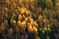 鎏金的秋季森林