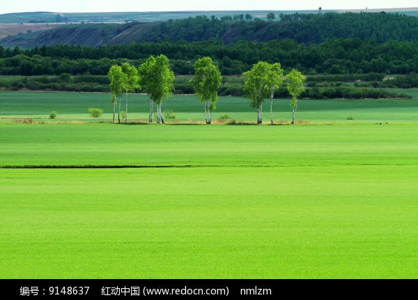 绿色农田树林风景 图片