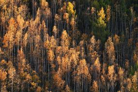 梦幻般的金秋森林