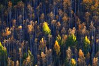 山林浓郁的秋色