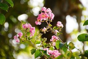 阳光下粉色的花
