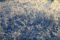 阳光下雪原草叶雾凇