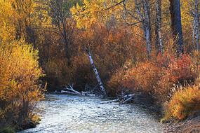 金色树林中的小河风景