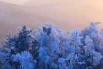 松林雾凇暮色