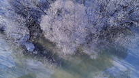 冰河丛林雾凇景观