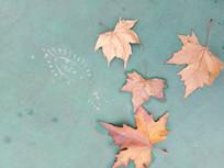枫叶和脚印