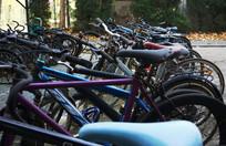 落满秋叶的校园的一排自行车