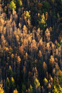 森林秋色浓郁