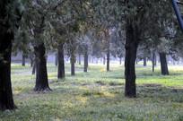 北京天坛公园里的树林