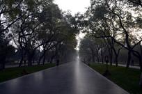 北京天坛公园里的树林特写