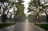 北京天坛公园里的树林特写图
