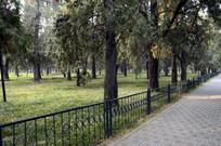 北京天坛公园里的树林图