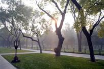 北京天坛公园里的树林图片
