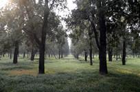 天坛公园里的树林特写图