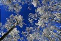 林海雪原雾凇梨花开