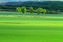 绿色农田风景