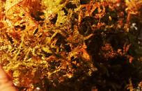 水中随波摇曳的水草苔藓