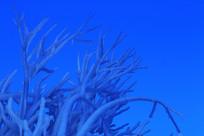树枝冰冻的冰溜风光