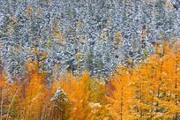 林海雾凇秋色