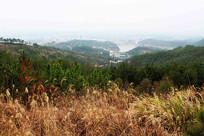 芦苇中大山