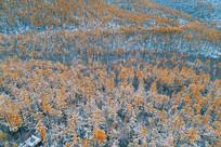 秋季雪林(航拍)