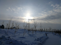 北方冬日的清晨