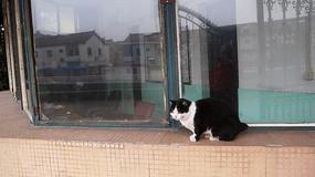 窗台上的猫