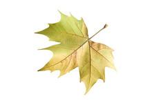 在秋风中飘落的树叶