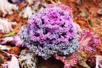 一束紫颜色的花特写