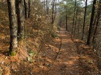 初冬的阳光透过森林小径