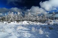 森林之冬银装素裹