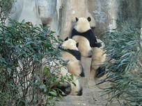 熊猫的背影