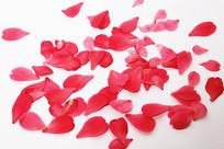 散落着红色花瓣