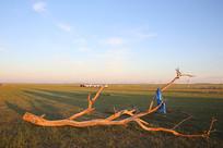 草原上的枯树