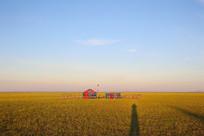 达里湖金色的草原