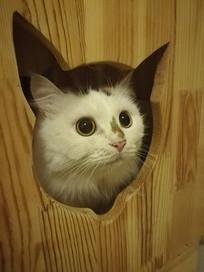 躲在猫窝里观察的猫