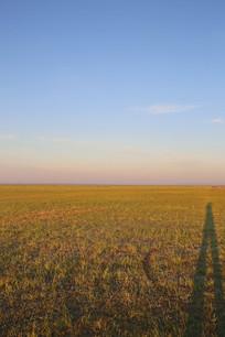金色阳光下的草原